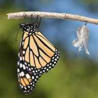 De metamorfose naar organisch leiderschap